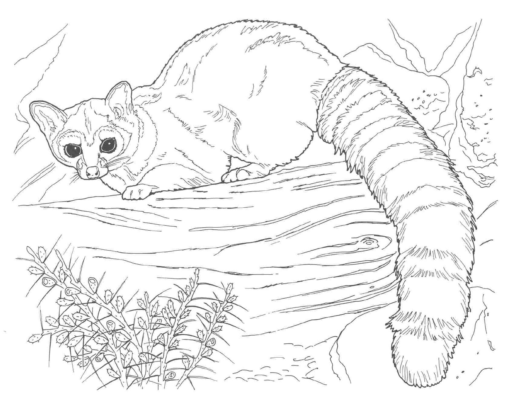 nocturnal animals coloring pages - photo#35